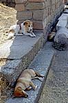 Asklepion: Dösende Hunde - Bergama