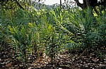 Gewürztour - Sansibar