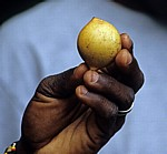 Gewürztour: Muskatnuß - Sansibar