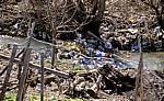 Müll oder die fehlende Müllabfuhr - Borova