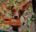 Schild gegen ungebetene Hundehinterlassenschaften - Wien
