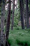 Skurugata - Småland