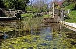 Agora (überflutet) - Butrint