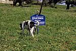 Hinweisschild: Apolonia mit Hund - Apollonia
