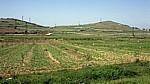 Zwischen Fier und Berat: Felder und Erdölfördertürme - Myzeqe-Ebene