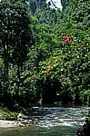 Bohorok - Bukit Lawang