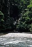Hinter dem Bohorok beginnt der Dschungel (Gunung Leuser Nationalpark) - Bukit Lawang