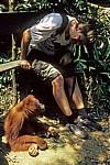 Jürgen neben Orang Utan Abu (Pongo abelii) - Leuser National Park