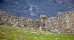 Schaf auf der Festungsmauer - Kruja