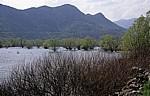 Skutarisee: Versunkene Bäume - Virpazar