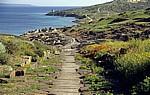 Die Cardo Maximus (Römische Straße) führt auf das Ausgrabungsgelände - Tharros