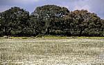 Sumpfwiese - Giara di Gesturi