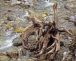 Baumstumpf im Wasser - Eng