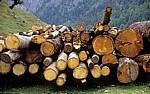 Holzstämme - Eng
