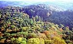 DDR: Blick von der Wartburg - Wald - Eisenach