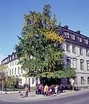 DDR: Gingkobaum am Fürstenhaus - Weimar