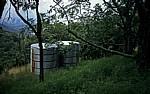 Botanical Garden: Tanks - Vumba Mountains