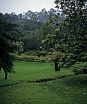 Botanical Garden - Vumba Mountains