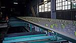 Commercial Farm: Obstproduktion (Sortierung nach Gewichtsklassen) - Mutare