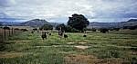 Commercial Farm: Straußenzucht - Mutare