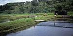 Commercial Farm: Schafe zwischen Forellenteichen - Mutare
