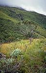 Der höchste Berg Zimbabwes, der Nyangani (2593 m), liegt hinter den Wolken - Nyanga National Park