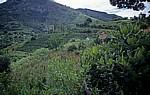 Landwirtschaft - Honde Valley