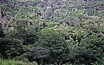Wald: Bäume und Flechten - Chimanimani Mountains