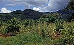 Anbau suptropischer Früchte und Mais (mix cropping) - Chimanimani Mountains