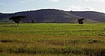 Teeplantage - Chimanimani Mountains