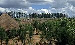 Bairro: Häuser und Vorgärten (mit Mais) - Chimoio
