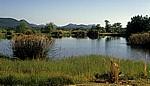 Teich - Nyanyadzi Hot Springs