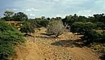 Ausgetrocknetes Flußbett - Masvingo