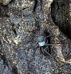 Insekt - Masvingo