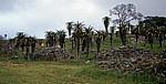 Ausgrabungsgelände: Aloen - Great Zimbabwe Ruins