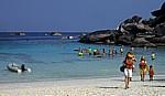 Insel Nummer acht (Ko Paed) - Similan Islands