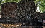 Geschichtspark Ayutthaya: Eingewachsener Kopf Buddhas - Ayutthaya