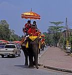 Verschiedene Transportmittel: Elefanten neben Autos - Ayutthaya