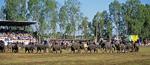 Elephant Round-up: Einmarsch der Elefanten zum Schulbesuch - Surin