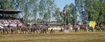 Elephant Round-up: Elefanten schieben Handkarren - Surin