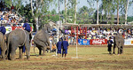 Elephant Round-up: Elefanten beim Basketball - Surin