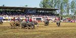 Elephant Round-up: Elefantenfußball - Surin