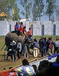 Elephant Round-up: Auch elefantöse Sieger genießen den Starrummel - Surin