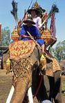 Elephant Round-up: Elefant und Mahout in Ausrüstung - Surin