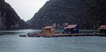 Schwimmende Häuser - Halong Bay