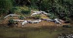 Krokodile am Prenn-Wasserfall - Da Lat
