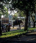 Elefant am Wat Phnom - Phnom Penh