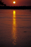 Irrawaddy-Delphin (Orcaella brevirostris) im Sonnenuntergang - Kratie