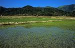 Reisfelder - Vang Vieng