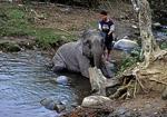 Karen-Dorf: Elefant bei der Morgentoilette - Doi Inthanon-Nationalpark